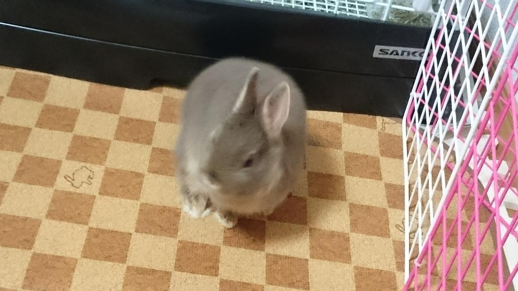 f:id:nether-rabbit-chiroru:20181106182111j:plain