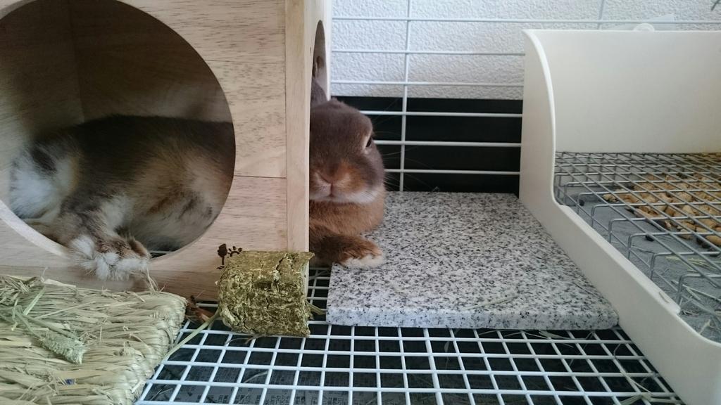 f:id:nether-rabbit-chiroru:20181107121322j:plain