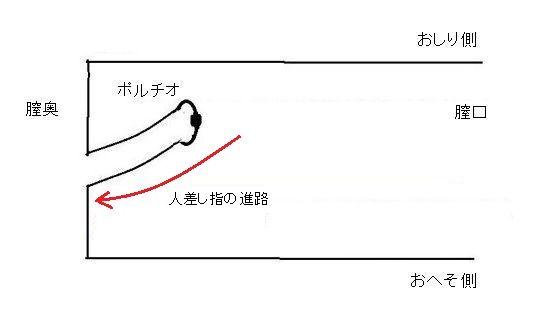女性をうつ伏せにした時の膣内簡略図(脱力状態)