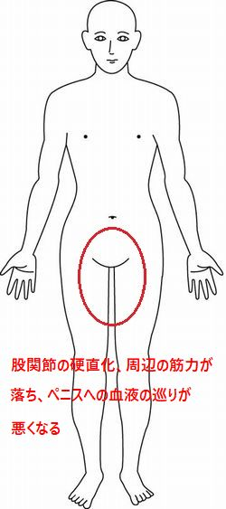 PC筋を中心とした下半身の筋力アップ