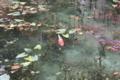 京都新聞写真コンテスト 『今話題の名もない池』