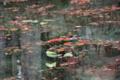 京都新聞写真コンテスト 『名もない池』