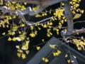 京都新聞写真コンテスト 『残る落ち葉は』