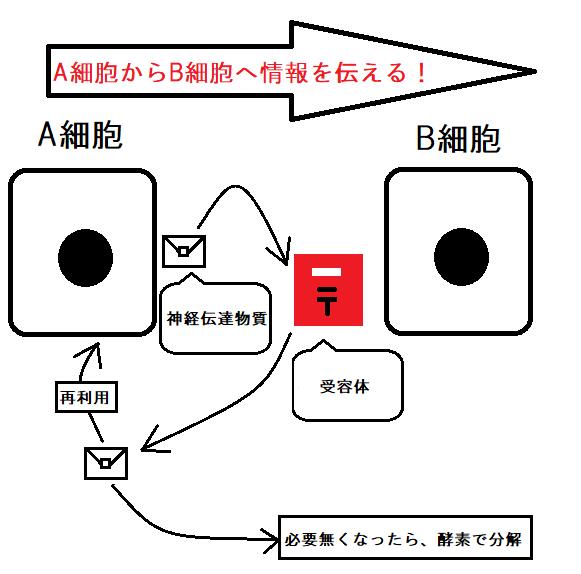 f:id:neurology-kanazawa:20210222170833p:plain