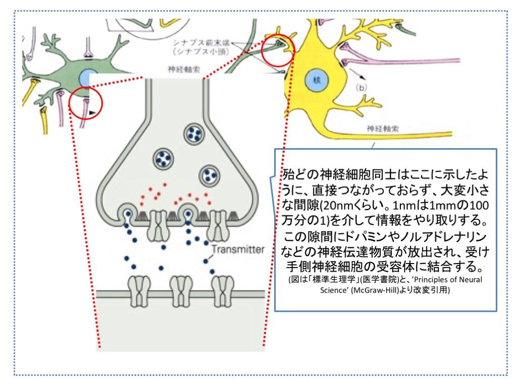 f:id:neurophys11:20161107052241j:plain:w300:right