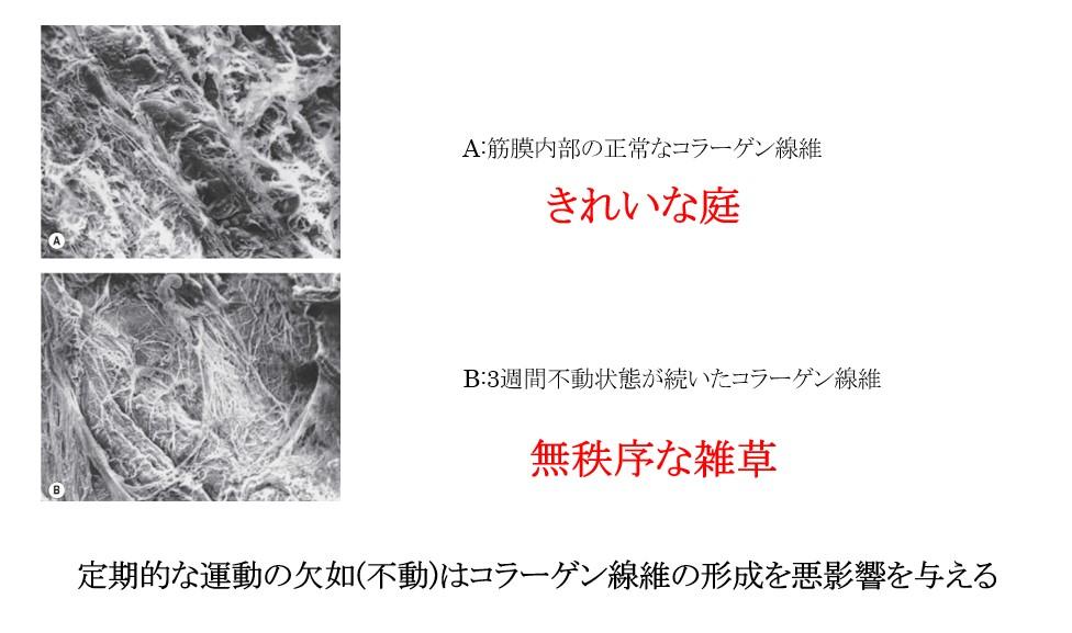 f:id:neurosamasama:20210225054042p:plain