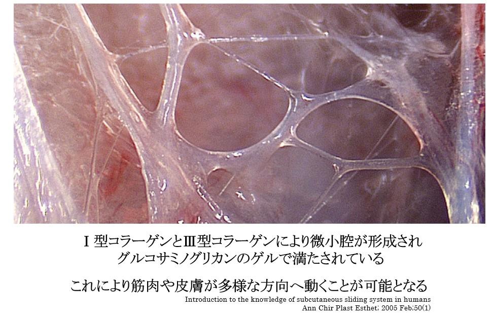 f:id:neurosamasama:20210301221535p:plain
