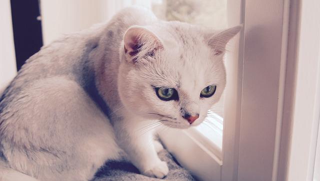 猫背を治すと胸が大きくなる?