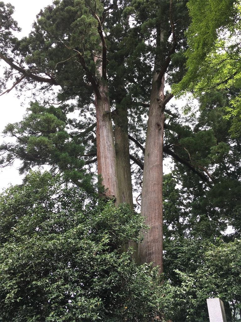 f:id:neutrallife-seitaikawamoto:20170825152814j:image