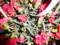 カーネーションの鉢植