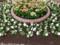 中島公園の花壇