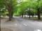 北大病院横銀杏並木