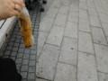 大通公園で食べた焼きトウキビ