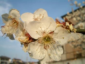 散歩の途中で見かけた花