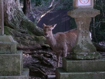 奈良・春日神社にて 何かくれる?
