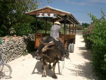 沖縄・竹富島にて 出番を待つ水牛車
