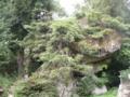 妻籠宿・鯉岩・・?