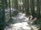馬籠宿・諏訪神社の参道