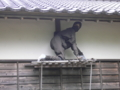 松前藩屋敷にて1