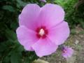 山形旅行で見かけた花3
