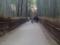 トロッコ嵐山への道
