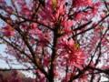 上田旅行の花1