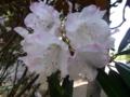 上田旅行で見かけた花3