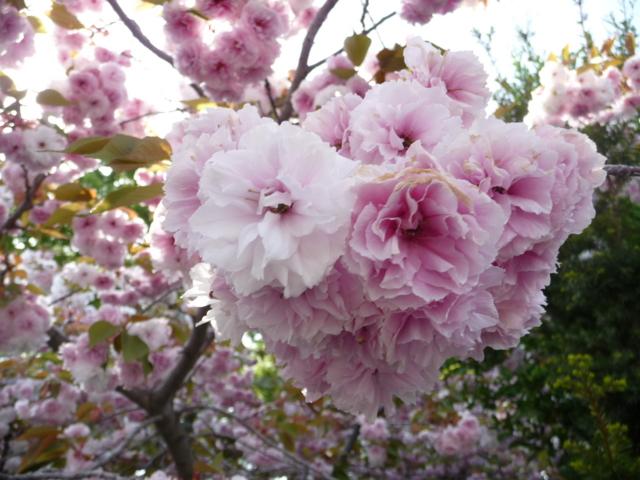 上田旅行で見かけた花4
