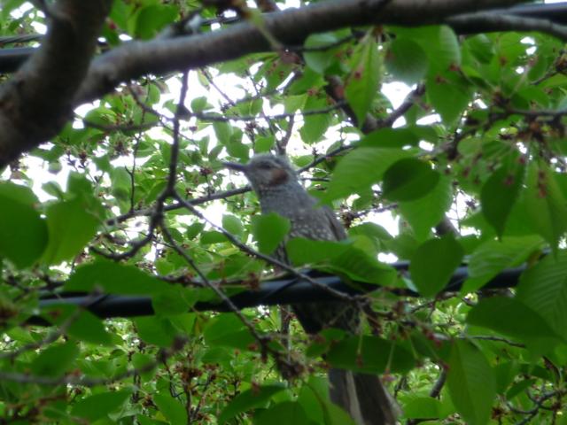 上田旅行で見かけた鳥