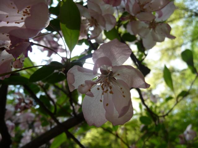 上田旅行で見かけた花5