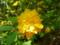 野に咲くたんぽぽ