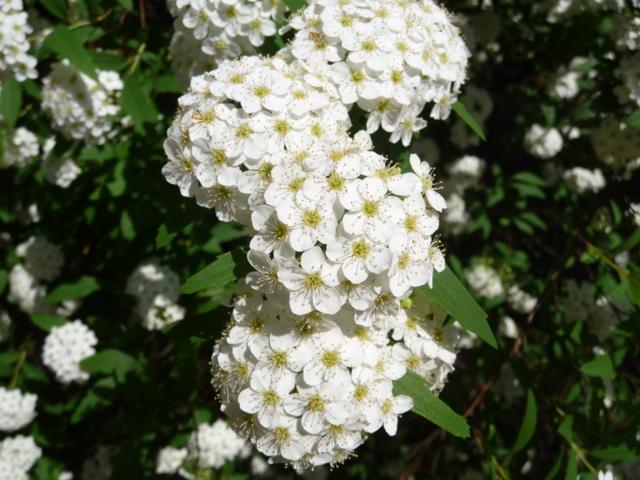 海龍王寺の花