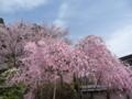 高野山・清浄心院の桜