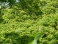 和歌山城・木の上にいるサギ達