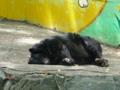 和歌山城動物園・寝る小熊