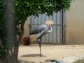 和歌山城動物園・パンクな鳥