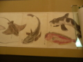 昔の魚図鑑1
