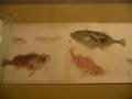 昔の魚図鑑2