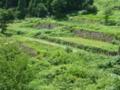 相倉合掌造り集落の段々畑