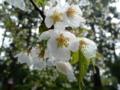 大崎八幡宮の境内の花