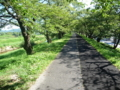 斐伊川の土手(桜の名所)