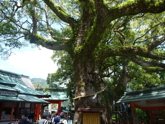 那智大社の神木