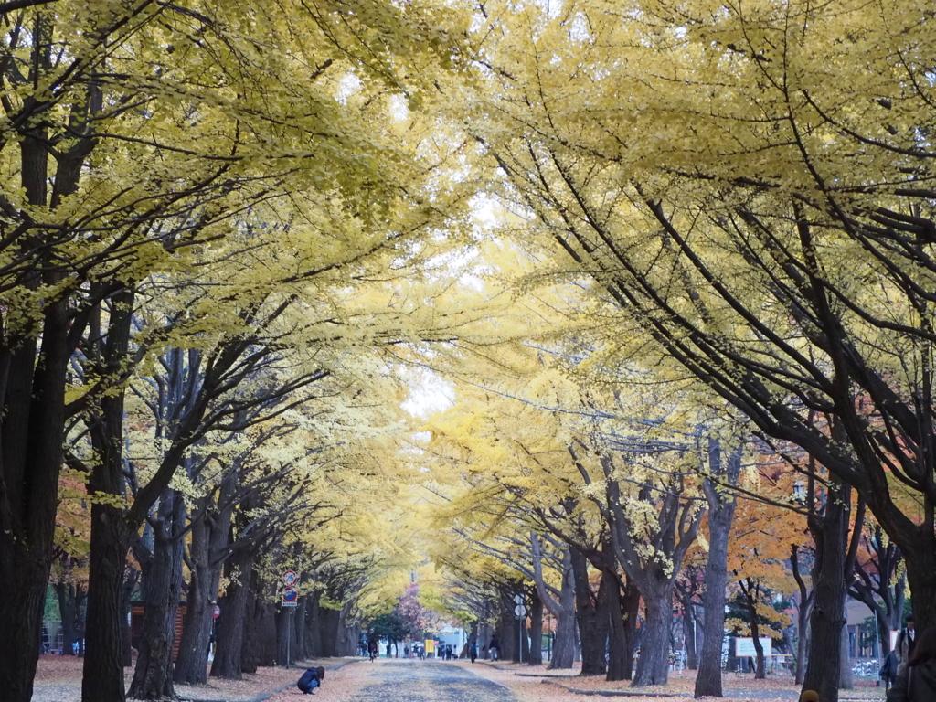 f:id:newforest_sapporo-higashi:20171102130927j:plain