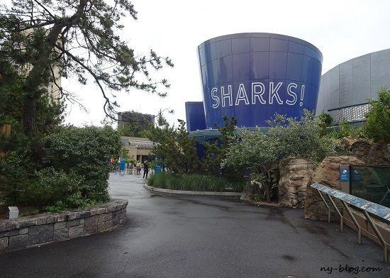 ニューヨーク水族館シャーク