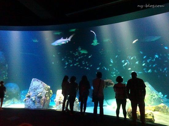 ニューヨーク水族館の水槽