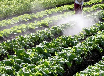 残留農薬の原因の農薬散布