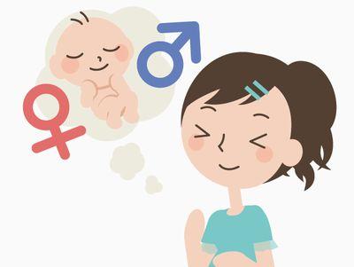 赤ちゃんの性別って産み分けできる?