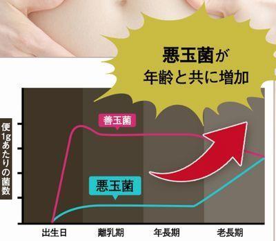 年齢による悪玉菌の増加グラフ