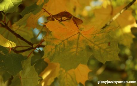 ドイツの栗の木の葉っぱ