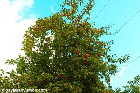 ドイツの公園にあるリンゴの木